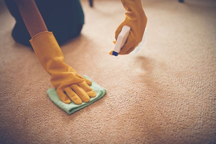 5 Effective Ways to Get Rid of Carpet Mold